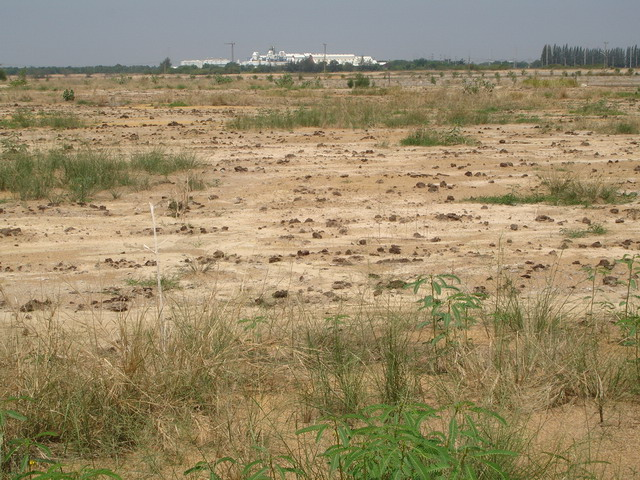 Organic matter was added into the soil to decrease the salinity problem.